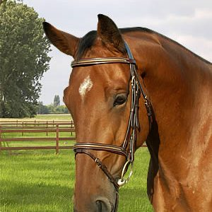Dyon Anatomic Snake Inlay Bridle with Flash