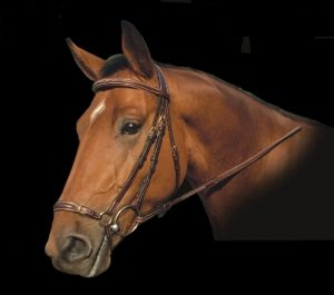 Dyon Fancy Padded Drop Noseband Bridle