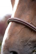 Dyon Raised Fancy Stitched  Classic Hunter Bridle