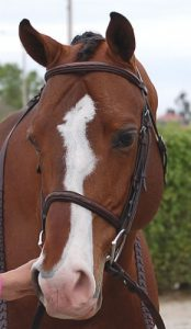 Dyon Raised Fancy Stitched  Classic Hunter Bridle