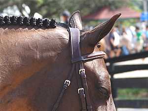 Dyon Anatomic Fancy Padded Hunter Bridle