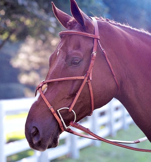 Edgewood Fancy Padded Figure 8 Bridle