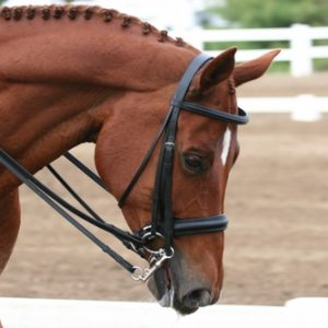 BR Double Weymouth Bridle with Reins
