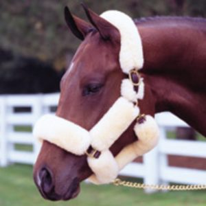 Walsh Wool Covered Shipping Halter