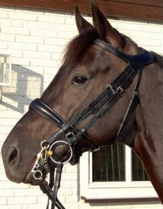 Dyon Difference Double Bridle