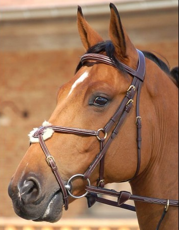 Dyon Anatomic Figure 8 Bridle with Brass
