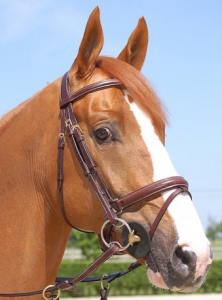 Dyon  Anatomic Large Flash Bridle