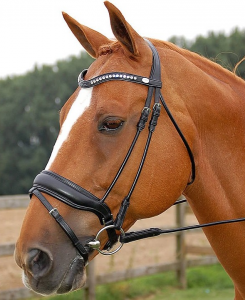 Dyon Rolled Large Crank with Flash Dressage Bridle