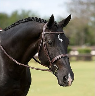 Dyon Wide Raised Fancy Stitched Hunter Bridle