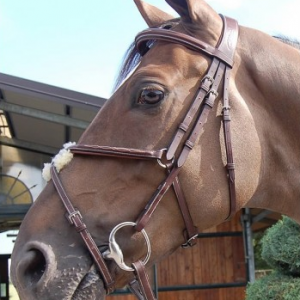 Dyon Anatomic Figure 8 Bridle with Stainless