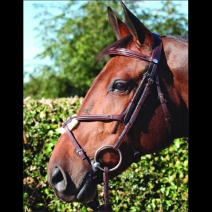 "Dyon Figure Eight ""No Ring"" Special Bridle"